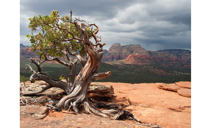 A Visit to Sedona: Experiencing the Vortex Phenomenon
